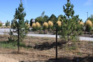 fencing picture with evergreen trees